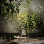 Bloomfield Track Cape Trib