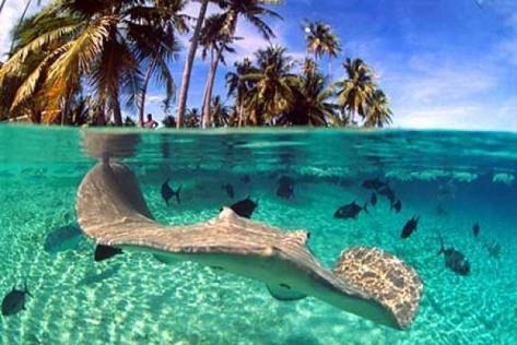 fiji-islands