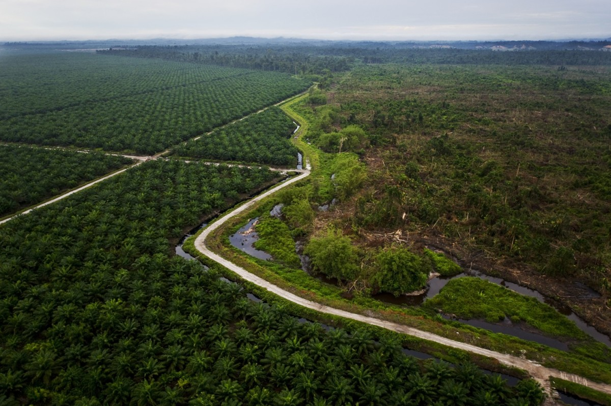 Palm Oil - Why DO We Care?
